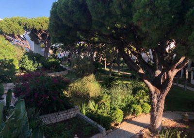 Grand jardin avec conifères et autres végétaux avec allée et chemin à différents niveaux légèrement ensoleillée