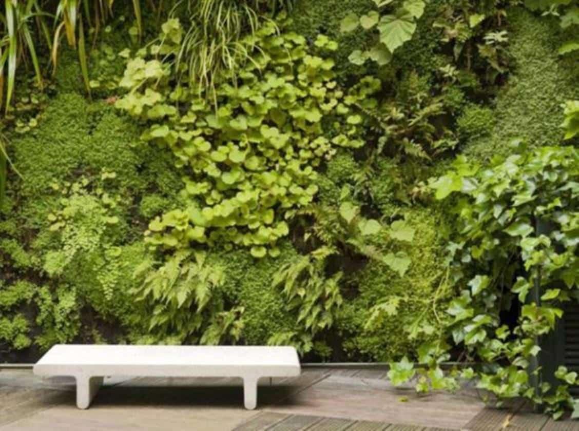 mur vegetal facade