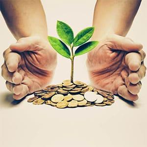 Mains encerclant une plante posée sur un tas de monnaie