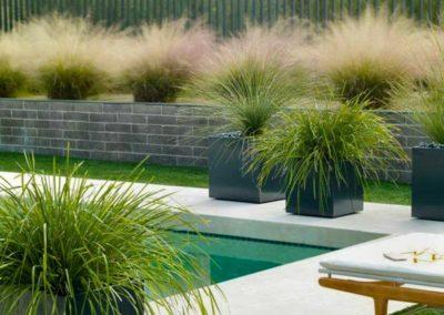 Création d'une végétalisation autour d'une piscine