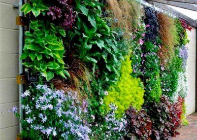 Création mur végétal sous une pergola