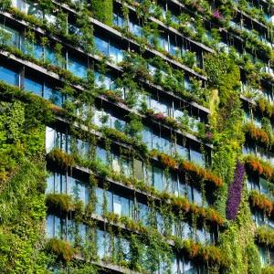 Façade végétalisé d'un immeuble