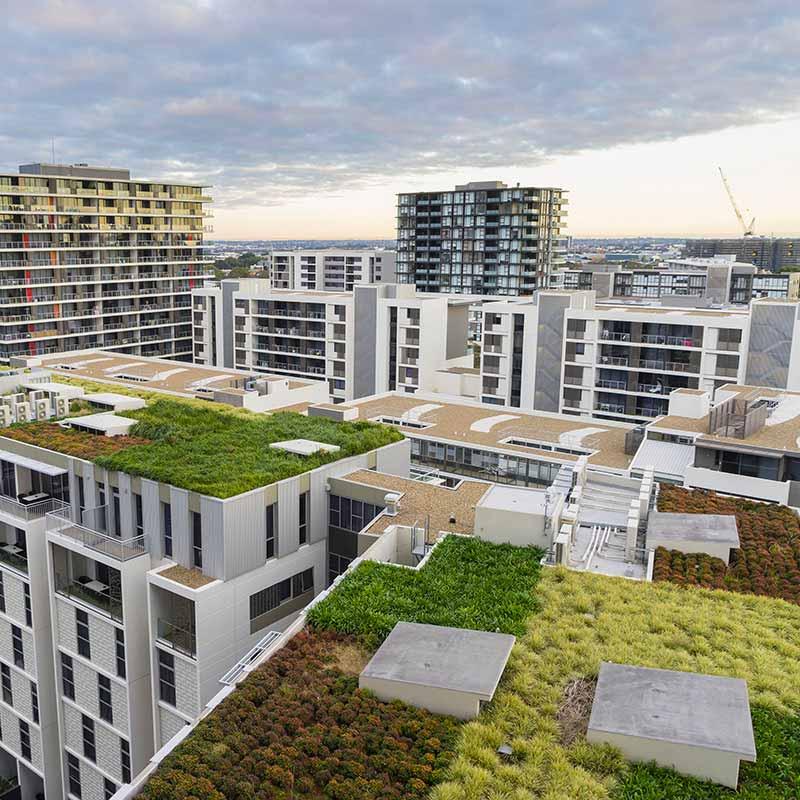 Vue du toit vert sur des bâtiments modernes et d'autres bâtiments résidentiels