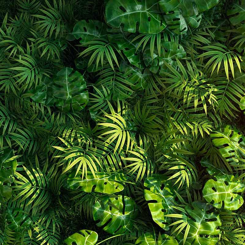 Mur végétal composé par large feuilles exotiques
