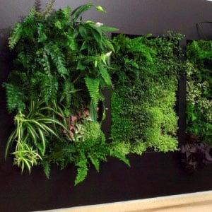 Mur végétal d'un bureau sur fond noir