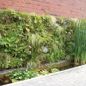 Conception de mur végétal sur mur de brique
