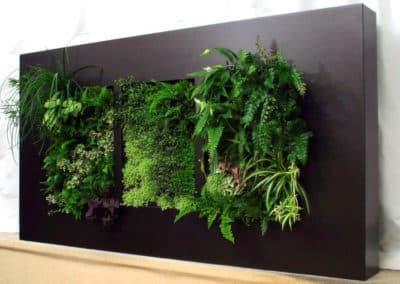 Mur végétal d'intérieur intégré sur forme rectangulaire noir