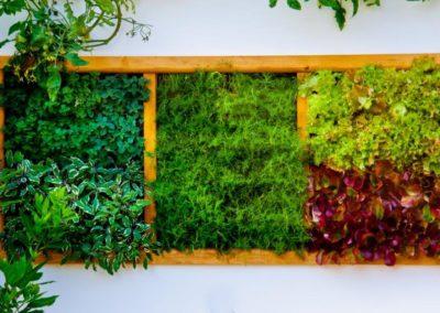 Mur végétal moderne d'intérieur en forme de cadre en bois