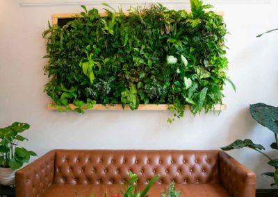 Mur végétal stabilisé au-dessus d'un canapé cuir marron