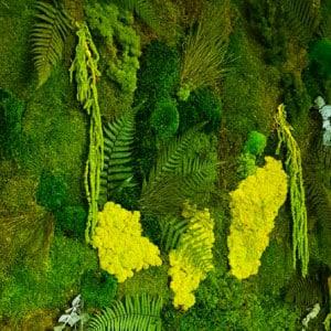 Mur végétal stabilisé mélange de mousse et de feuilles de fougère