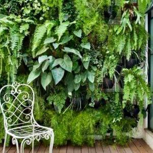 Mur végétal sur terrasse bois