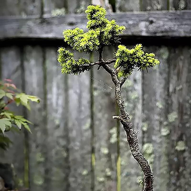 Végétaux du japon devant palissade bois
