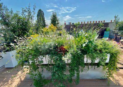 Composition de végétaux sur toit terrasse